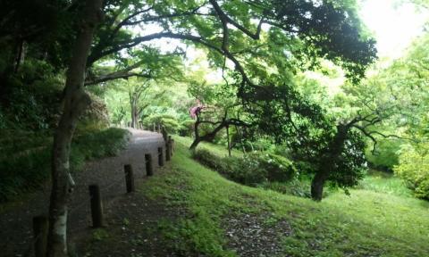 緑あふれる小道